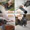 威克士(WORX)家用充电式电锯WX550 锂电多功能曲线锯往复锯马刀锯木工手电锯手提锯五金电动工具