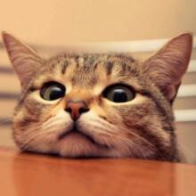 梦芭莎 宠物猫活体 幼猫 猫咪活体 中华田园猫活体 幼崽 宠物店猫 纯种小猫橘猫【保活到家终身售后】 田园猫(如需其他品种猫咪联系客服) 公