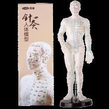女人体穴位高清图_【人体教学模型】价格_图片_品牌_怎么样-京东商城
