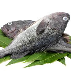 鲜御 烟台新鲜海鱼黑鱼 1kg 袋装 海鲜水产黑头鱼
