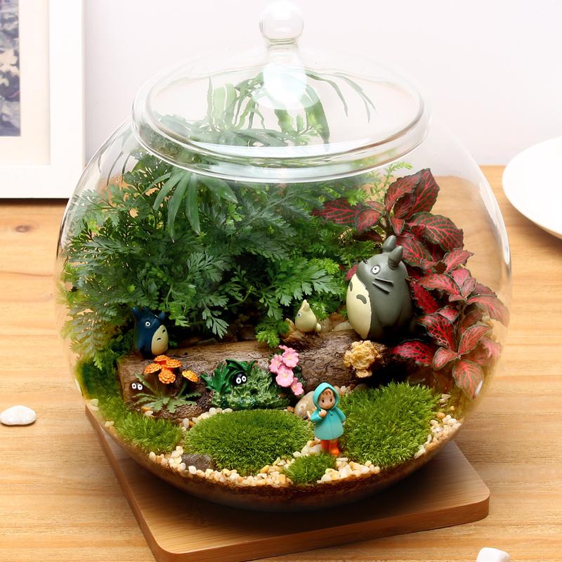苔藓微景观生态球奇趣植物创意办公室迷你diy盆栽花卉