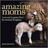 Amazing Moms  Love and Lessons From the Animal K