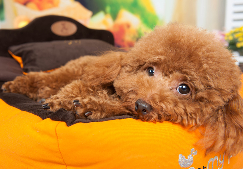 小型犬专用长方形宠物狗窝