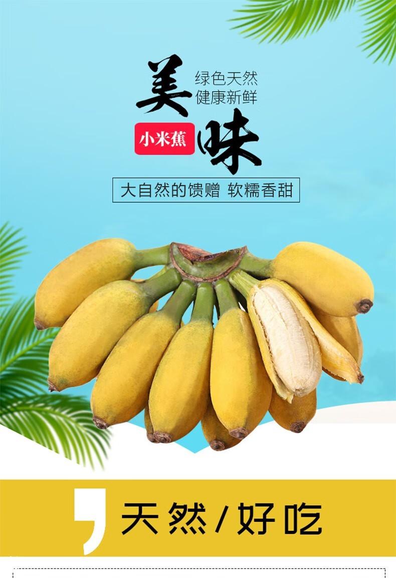 54322-黔食荟 北纬22°新鲜国产香蕉小米蕉 10斤整箱装-详情图