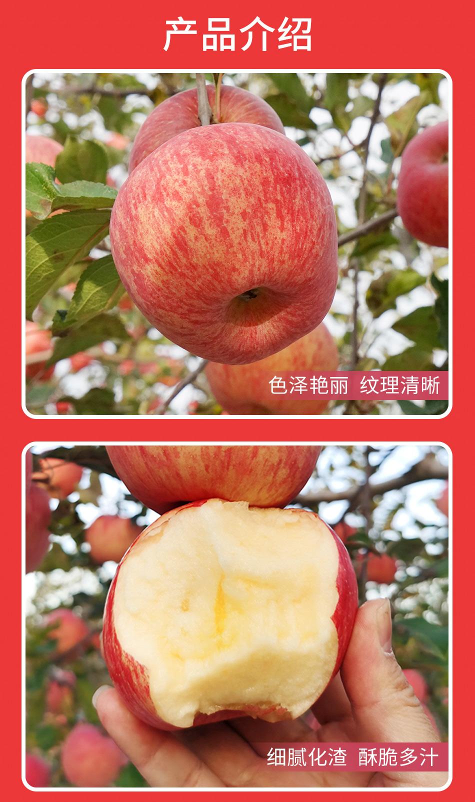 54330-金三源正宗洛川红富士苹果 大果整箱 时令生鲜水果 富含蛋白质膳食纤维素是健康低脂健身好食材 8颗轻享礼盒装(80mm-85mm果 约4斤)-详情图