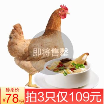 【旗舰店】农家散养苏北土鸡杀后约850g/只