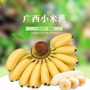 【果园直发,坏果直赔】广西小米蕉  5斤装