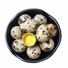 黄河畔 农家新鲜 生鹑蛋 生鲜鸟蛋 宝宝辅食火锅食材 105枚装